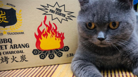 Cara mudah hilangkan bau najis kucing