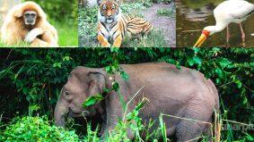 10 senarai haiwan terancam di Malaysia