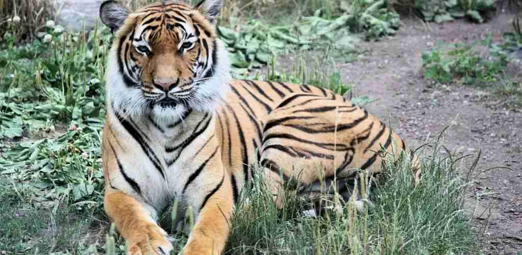 10 Senarai Haiwan Terancam Di Malaysia Sinar Plus