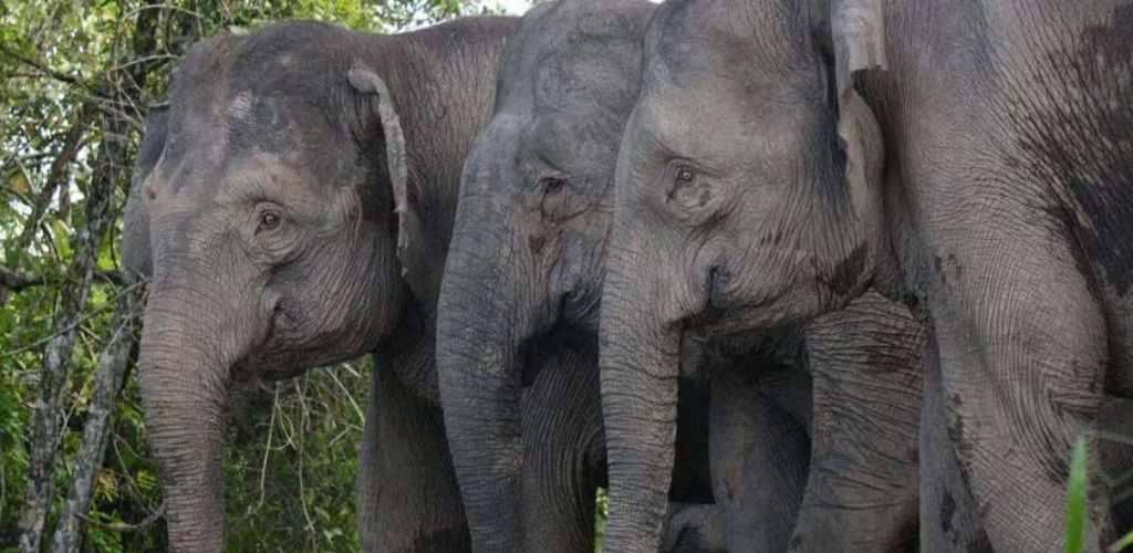haiwan gajah