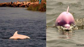 Ikan lumba-lumba luar biasa, Pinky lahirkan anak pink yang cantik