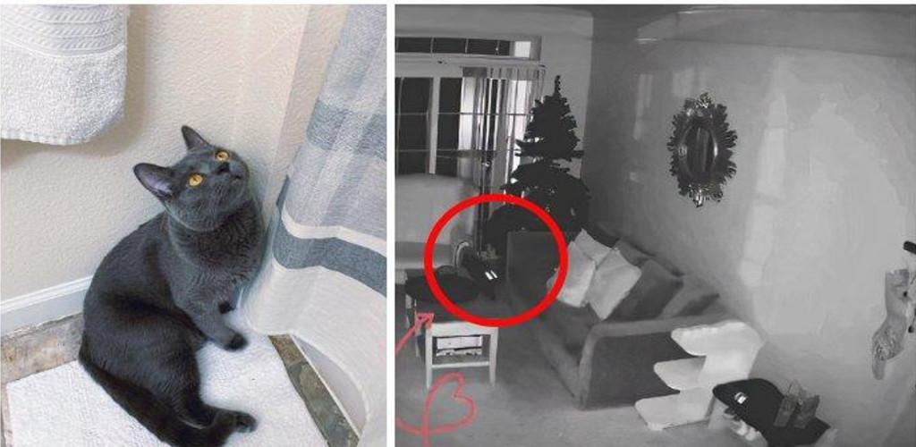 Wanita ini nekad tidak tinggalkan kucingnya sendirian selepas lihat apa terjadi di CCTV