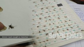 Hobi pelik! Wanita kumpul bangkai nyamuk yang berjaya dibunuh sebagai koleksi