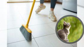 Tuan kepada kucing kena bersihkan jika haiwan peliharaannya berak di rumah jiran. Ramai yang pandang remeh perkara ini…