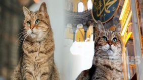 'Penjaga' Hagia Sophia dalam kenangan, 8 fakta mengenai Gli tentang kisah hidupnya