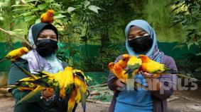 'Sarip', 'Mingo', 'Leman' dan yang lain sedia untuk dijadikan haiwan angkat