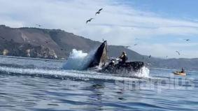 [VIDEO] Hampir 'ditelan' ikan paus ketika berkayak, awas penggemar aktiviti sukan laut!