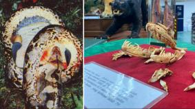 Kisah ular sawa yang pernah menggemparkan negara, bunuh manusia dewasa dengan gigit dan belit