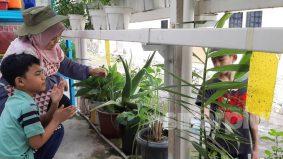 Berkebun suka-suka di rumah, rupanya ini yang akan anda dapat