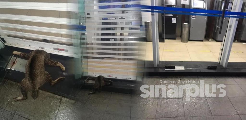 Kucing mati tersepit pintu 'roller shutter', Persatuan Haiwan Malaysia giat cari si pelaku!