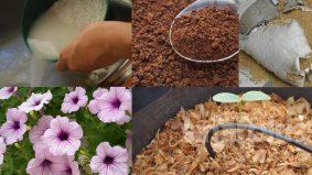 Nak sayuran atau pokok bunga subur, ini petua mudah guna bahan di dapur