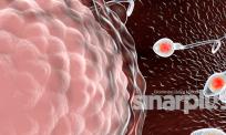 Covid-19 mampu jadi penyebab masalah mandul lelaki – kajian