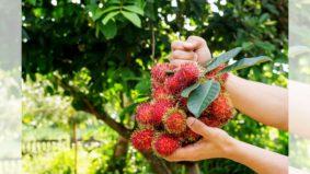 [VIDEO] Jangan main petik buah daripada pokok tidak bertuan. Ini dia adab yang Islam ajar jika kita nak manfaatkan buah-buahan tadi