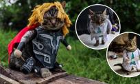 Comelnya, si meow pandai gayakan baju macam model terkenal. 'Pereka fesyen', Fredi Lugina cetuskan sensasi media sosial…