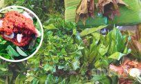 12 jenis ulam, rempas-ratus bangkitkan aroma botok-botok warisan nenek