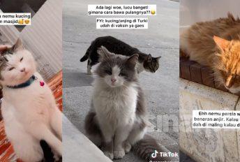 [VIDEO]Pemuda ke Turki semata-mata mencari kucing liar, terkejut apa yang terjadi
