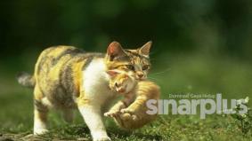 Wanita buang kucing akibat bimbang dijangkiti Covid-19 didenda lebih RM12,000