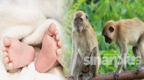 Bayi kembar lapan hari maut dicampak sekumpulan monyet