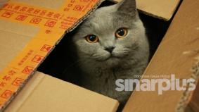Kucing sangat gemar dengan kotak, ini sebabnya