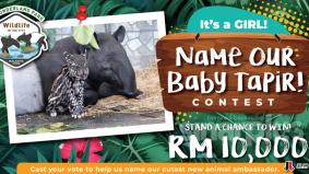 Peluang menang wang tunai RM10,000 hanya beri nama anak tapir