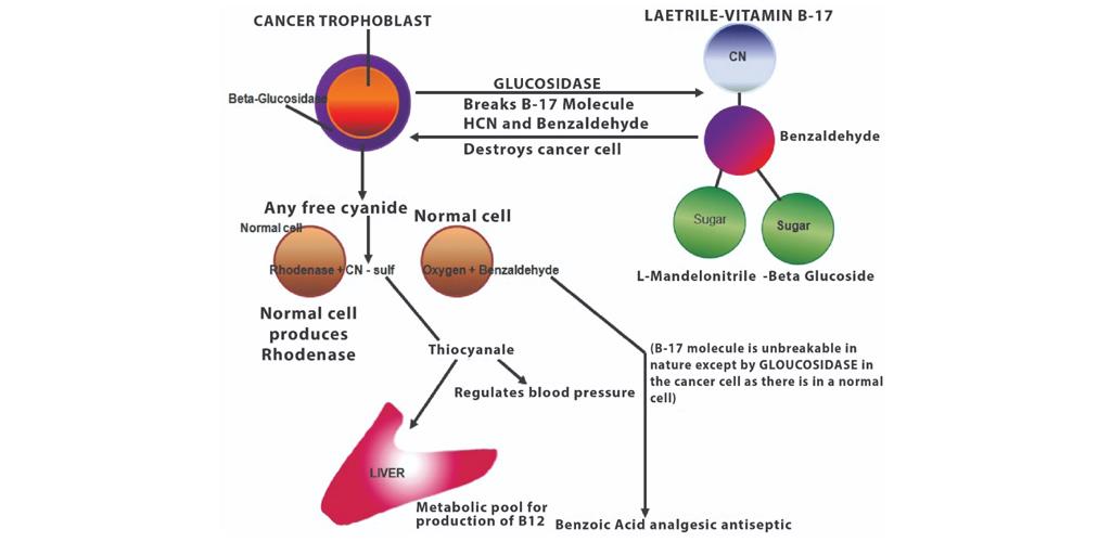 Kepentingan Vitamin B17 Laetrile untuk pesakit kanser dan penyakit metabolik