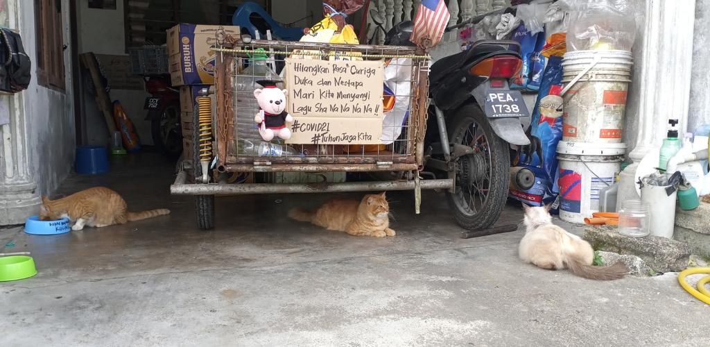 kucing anjing liar