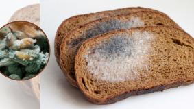 3 kaedah mudah simpan roti agar tidak cepat berkulat