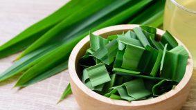 Kecilkan pori wajah, daun pandan banyak manfaat untuk kulit!