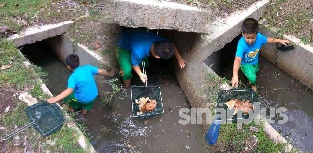 Selamatkan kucing hanyut, Adik Rayyan kagumkan warganet