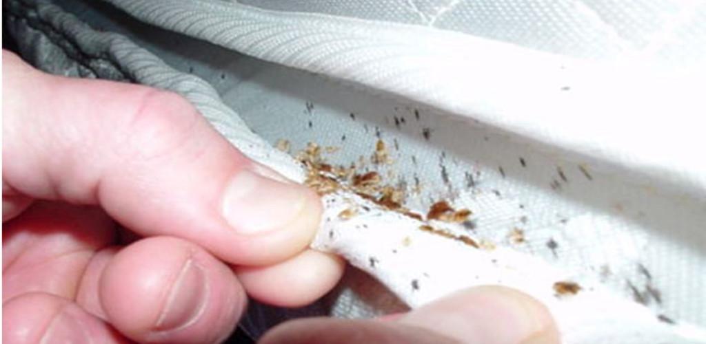 Hati-hati! Lipas, kumbang, tikus, dan ular boleh bersarang dalam tilam koyak