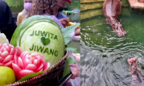 [VIDEO] Siap berkompang, makan beradab, persis perkahwinan Melayu. Pasangan badak Jiwang Juwita selamat disatukan