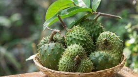 Menakjubkan! Bukan sahaja buah durian belanda berkhasiat, malah daunnya juga dapat rawat penyakit kronik