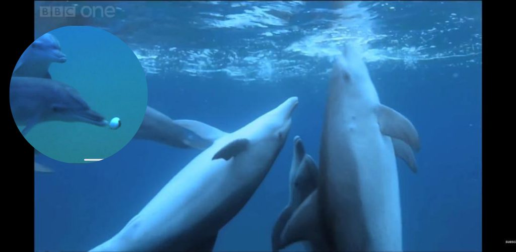 Ikan lumba-lumba 'khayal' di lautan menggunakan ikan buntal