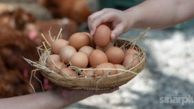 5 mitos tentang telur yang tak perlu anda percayai. Pakar pemakanan bantu beri pencerahan
