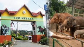 Zoo Melaka perlu RM600,000 sebulan, hampir 6 bulan tak beroperasi