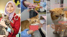 [VIDEO] Begini caranya bagi kucing ubat. Doktor veterinar tunjuk step by step, confirm tak melawan