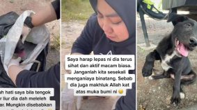 [VIDEO] Kejam! Anjing dijerut leher, dibungkus di dalam guni. Nasib baik sempat diselamatkan pencinta haiwan