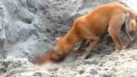 Tragis! Anjing jalanan makan mayat terapung di sungai