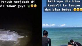 [VIDEO] Penyu belimbing sesat di air tawar, penduduk prihatin sanggup pindahkan ke laut