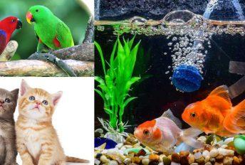 Tidak boleh sakiti haiwan. Jika membela, penuhi hak beri makan, minum dan rehat