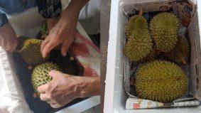 Wanita kongsi tip kurier buah durian, kos murah, cara-caranya…
