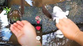 Katak dijadikan haiwan kesayangan, video geletek dapat 1juta tontonan