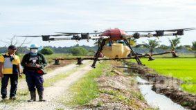 Pesawah muda guna dron raih pendapatan lumayan