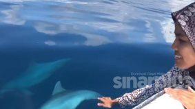 [VIDEO] Pengurus resort kongsi moment manis 'bermain' ikan lumba-lumba di Pulau Tioman