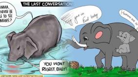Diberi makan nanas berisi mercun, gajah bunting mati dibunuh penduduk