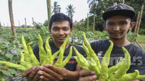 Pasca Covid-19 : Golongan belia digalakkan untuk ceburi bidang pertanian
