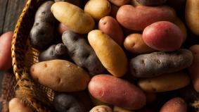 Sahur dan berbukalah dengan kentang, bekal tenaga terbaik