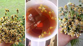 Viral teh bunga kekwa liar. Sedap katanya...