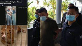 Pemilik pitbull serang wanita hingga parah kena denda hanya RM2,000, ini komen Animal Malaysia