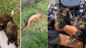 Ganjaran RM5k jika beri maklumat si pemanah monyet, biawak dan RM2k buat sepupu 'pembuang' 2 kucing